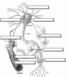 Label A Neuron Cycle 3