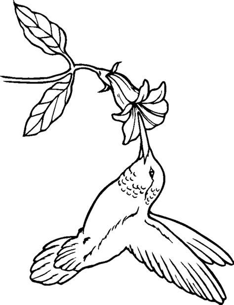 free Hummingbird coloring page | school room | Bird