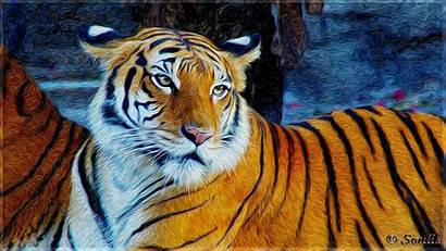Tiger Wallpapers Soulis Awesome Triplets Almost Picked