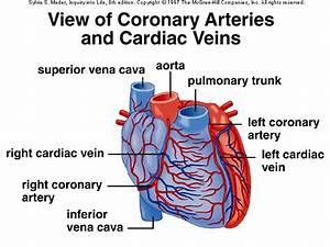 Arteries Quotes  Quotesgram