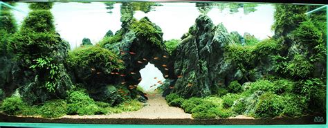 aquascaping with rocks best aquascapes of 2014 aquarium info