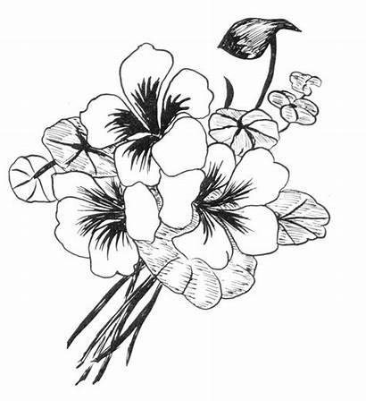 Flores Desenhos Flor Dibujos Flowers Drawing Dibujo