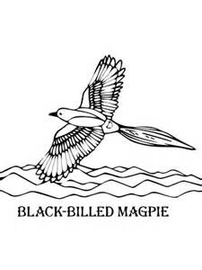 black billed magpie coloring page supercoloringcom