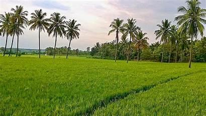 Land Paddy Field