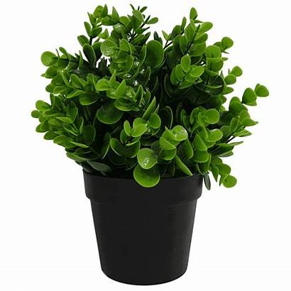 Plant Potted Artificial Peperomia Uv Resistant 20cm