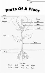 Parts Of A Plant  Plants And A Flower On Pinterest