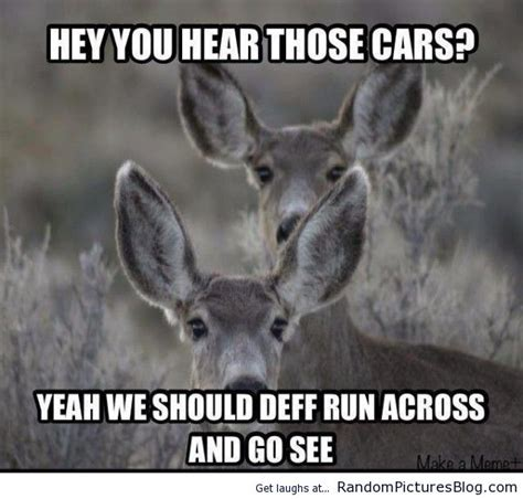 Deer Meme - 56 best hunting memes images on pinterest funny images funny photos and hunting stuff