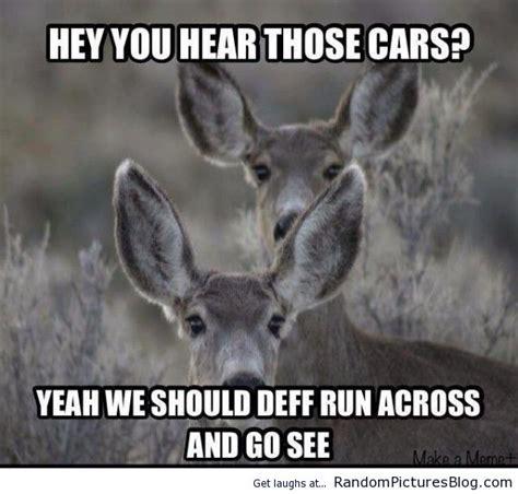 Funny Deer Memes - 56 best hunting memes images on pinterest funny images funny photos and hunting stuff