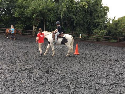 hill equestrian centre farm riding