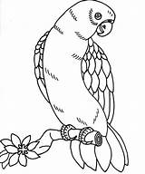 Coloring Pages Bird Tropical Parrot Realistic Printable Getcolorings sketch template