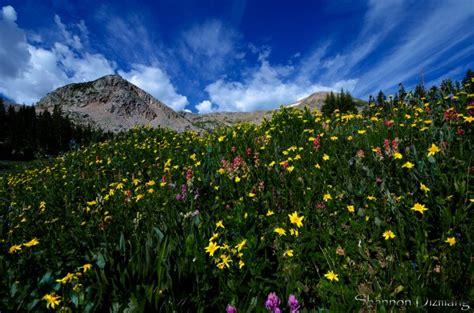 colorado wilderness wildflower peaks indian denver hikes wildflowers usa flickr shannon area trail hike