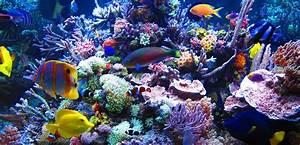 Setting Up Your First Marine Aquarium