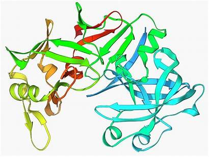 Enzyme Pepsin Stomach Science Laguna Library Photograph