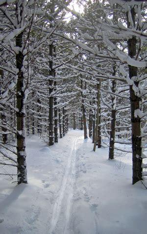 Explore Winter Trails  Bu Today  Boston University