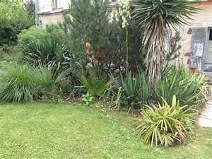Mimosa Résistant Au Froid : le forum des fous de palmiers r sistance au froid du sabal palmetto ~ Melissatoandfro.com Idées de Décoration