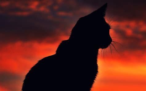 Animal Silhouette Wallpaper - cat silhouette sunset animals wallpapers hd desktop