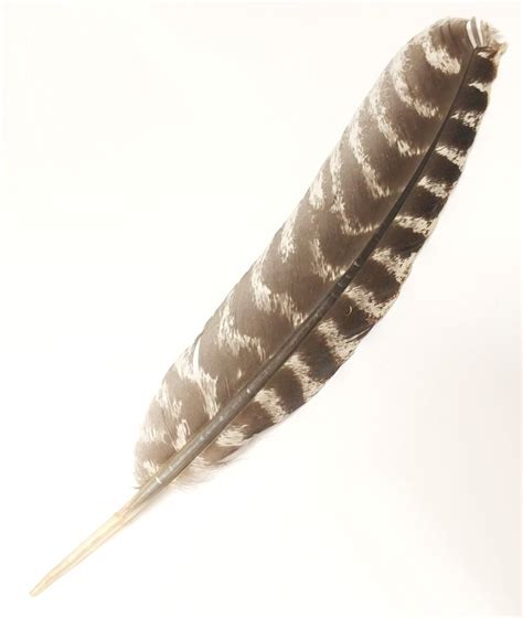 turkey feather turkey feather for instrument bore application