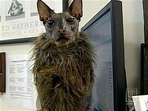 FUNNY WORLD: Ugly Bat Boy - The Ugliest Cat In The World
