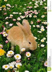 Cute Baby Bunnies with Flowers