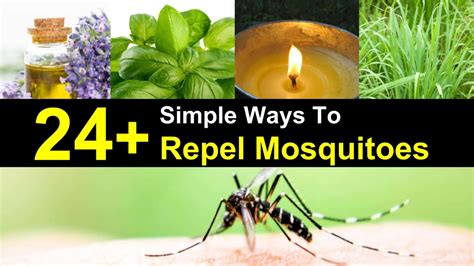 repel mosquitoes in yard 24 simple ways to repel mosquitoes