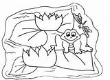 Frog Coloring Pond Pages Colouring Cycle Clipart Cyles Print Lilypad Polly Pocket Drawings Return Popular sketch template