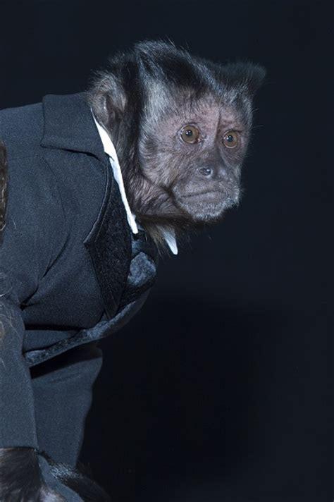 crystal  monkey ethnicity  celebs