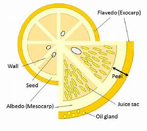 Healthy Wealth  Benefits Of Citrus Pith  U2013 Why You Should