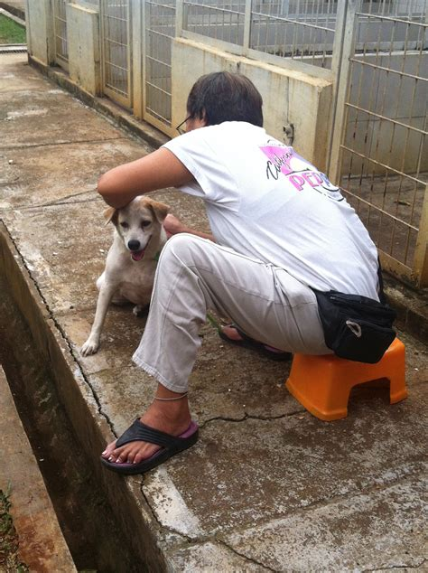 love  dogs  volunteers  pondok pengayom