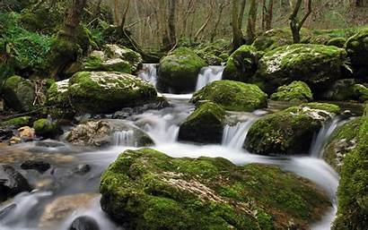Stream Water Earth Forest Rock Nature Moss