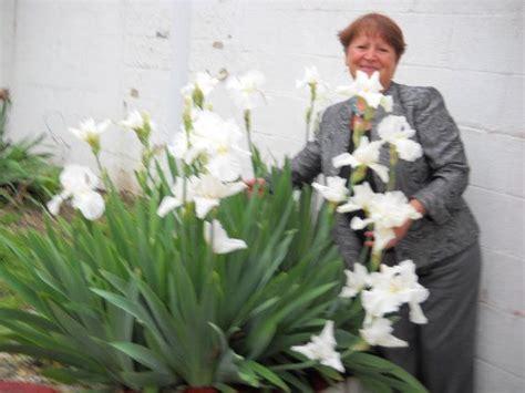 white iris plant  bulbs  leaves perennial