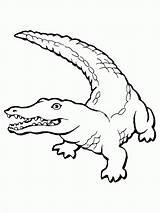 Crocodile Drawing Line Drawings Getdrawings sketch template