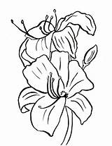 Lily Coloring Flower Easter Printables Pages Printable Drawing Template Pdf Samanthasbell Clipartmag Continue Reading sketch template