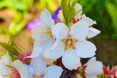 fiori di bach opinioni fiori di bach elenco propriet 224 e benefici rimedi