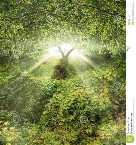 Garten Eden Stock Abbildung Illustration Von Wald, Ruhe