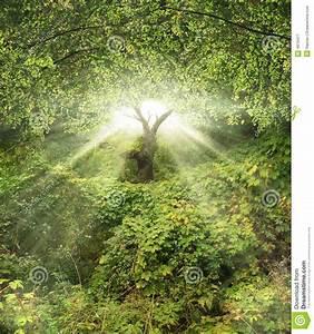 Garten Eden Ratingen : garten eden stock abbildung illustration von wald ruhe 4615417 ~ Markanthonyermac.com Haus und Dekorationen
