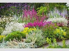 Weekend Gardener Drought Resistant Plants Williamson Source
