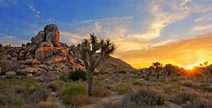 Joshua Tree National Park Vacation, Travel Guide and Tour