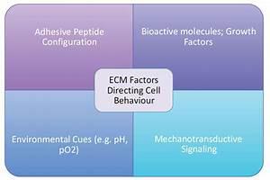 A Review Of Current Regenerative Medicine Strategies That