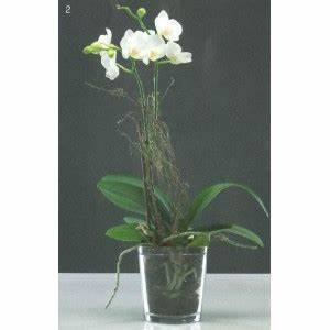 Cache Pot Orchidée : cache pot orchid e transparent l 39 atelier des fleurs ~ Teatrodelosmanantiales.com Idées de Décoration