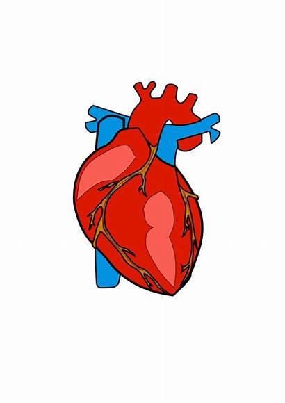 Heart Clipart Human