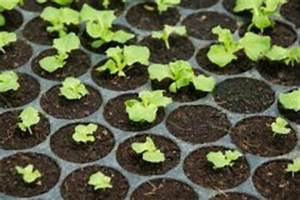 Salat Pflanzen Abstand : kopfsalat anbauen viele sorten schnelle ernte ~ Markanthonyermac.com Haus und Dekorationen