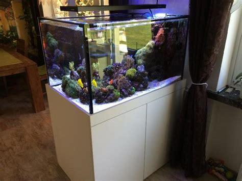 aquarium 500 liter meerwasser aquarium raumteiler 500 liter komplett in dortmund fische aquaristik kaufen und