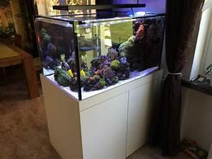 Komplett Aquarium Kaufen : meerwasser aquarium raumteiler 500 liter komplett in dortmund fische aquaristik kaufen und ~ Eleganceandgraceweddings.com Haus und Dekorationen