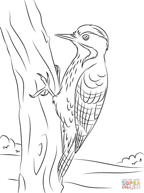 De Specht Kleurplaat by Fulvous Breasted Woodpecker Coloring Page Free Printable