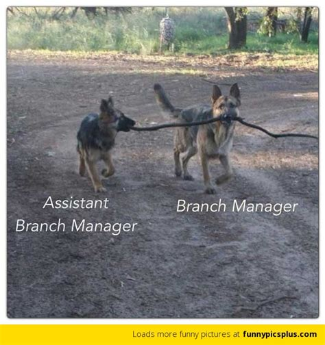 Branch Manager | Funny Pictures