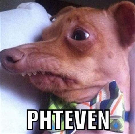 Dog With Overbite Meme - phteven tuna the dog know your meme