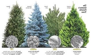 Christmas Tree Type Plants by Christmas Tree Types Animebgx