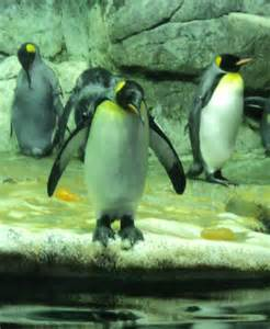 Zoo in Galveston TX