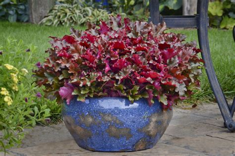 plants for planters the best container plants which offer long lasting beauty reliable remodeler