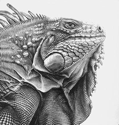 green iguana  color  httpkleurvitalityblogspotbe